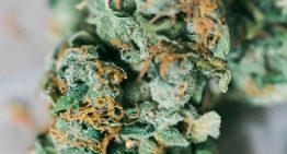 Things To Look For In A Medical Marijuana Dispensary