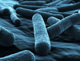 Legionella training can help you in longer run