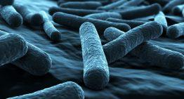 Legionella training can help you in longer run