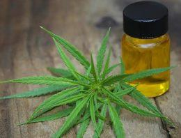 Great Details for the Perfect Usage of the Cannabis Oil