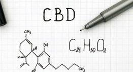 CBD Guide: 5 Important Facts You Should Know Right Now