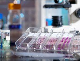 Regenerative Medicine: An Overview