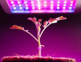 How Do You Grow With LED?