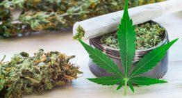Is It Healthy to Smoke CBD Flowers?