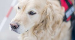 Facts About Pet Anxiety